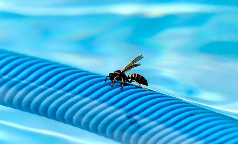 Cómo eliminar plagas de avispas