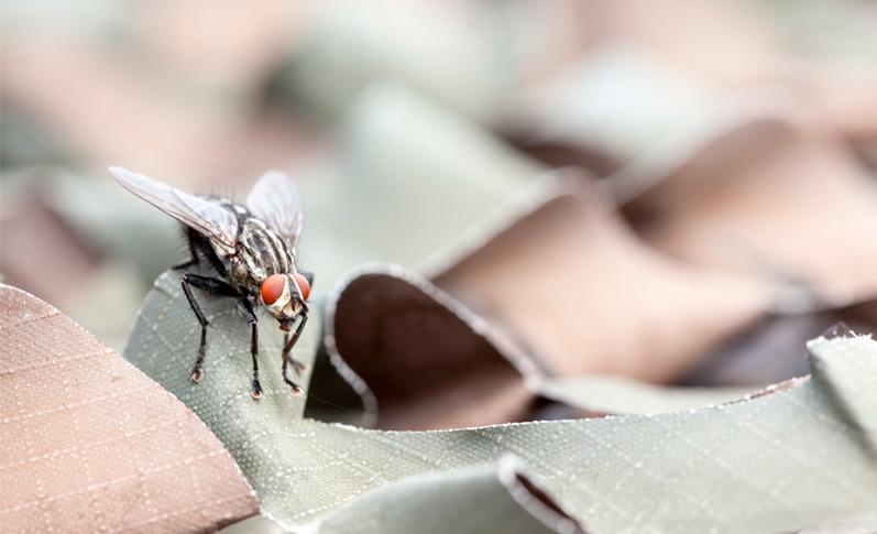 cómo ahuyentar moscas en casa