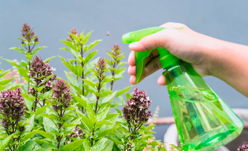 Cómo eliminar plagas en las plantas de forma natural