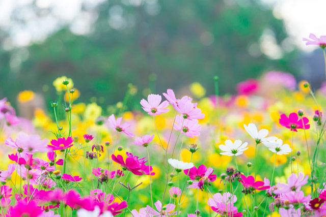 Las plagas más comunes en primavera