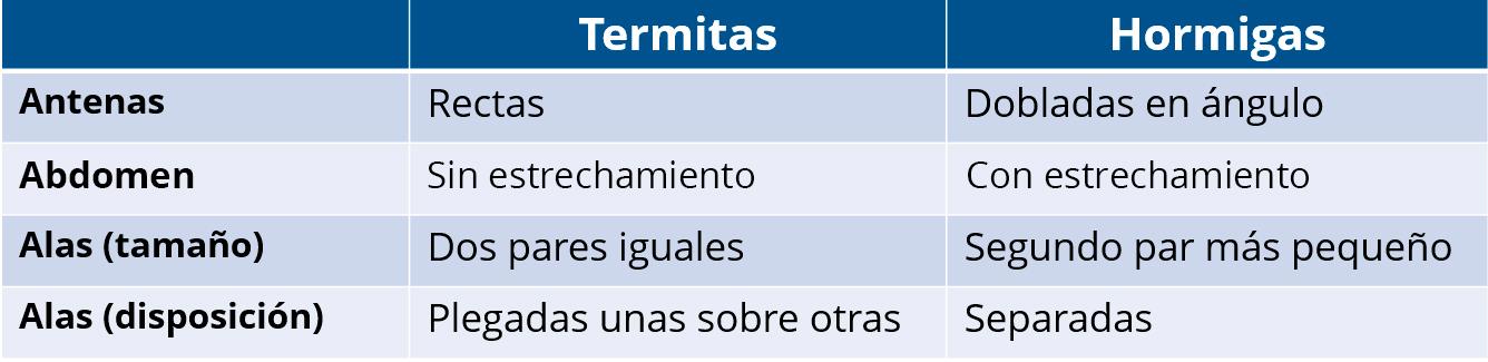 tratamiento termitas