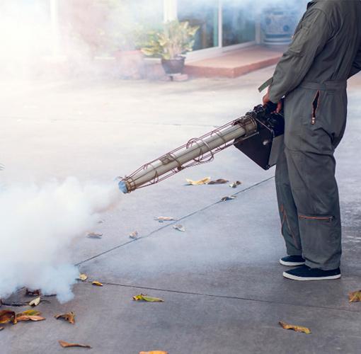 empresa fumigación mosquitos