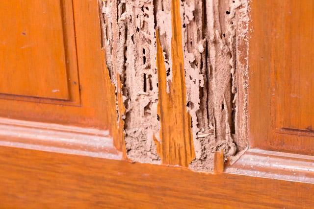 Precios de tratamientos contra termitas